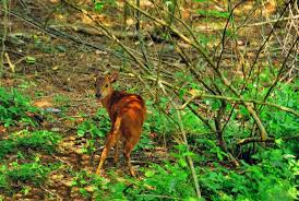 Hawaan Forest